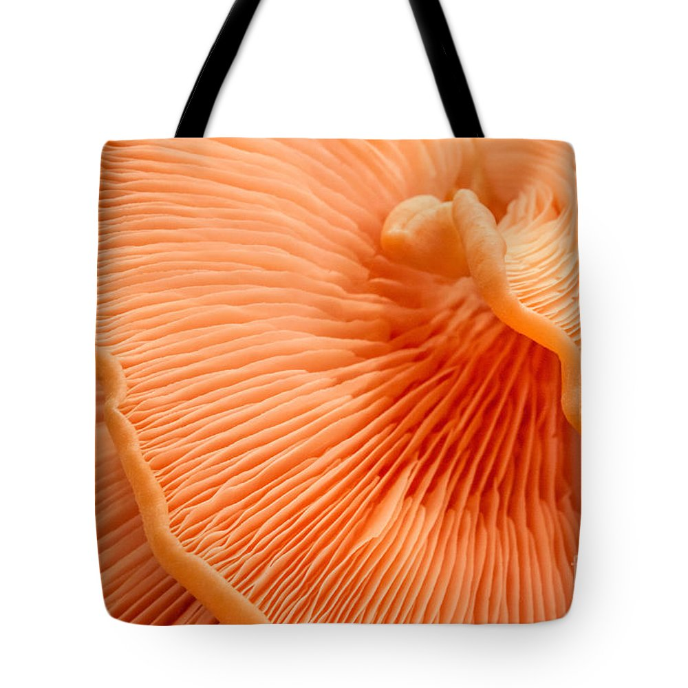 Pink Oysters Tote Bag featuring the photograph Arc of Life by Marilyn Cornwell