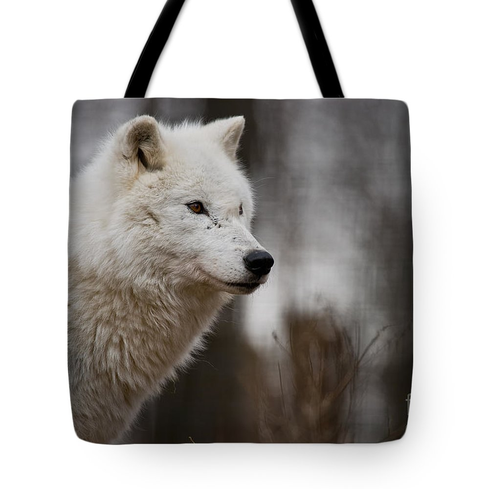 Arctic Wolf Tote Bag featuring the photograph Arctic Wolf Pictures 1242 by World Wildlife Photography