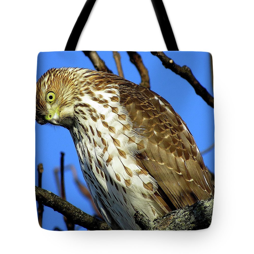 Hawks Tote Bag featuring the photograph Are You Talkin' To Me? by Linda Stern