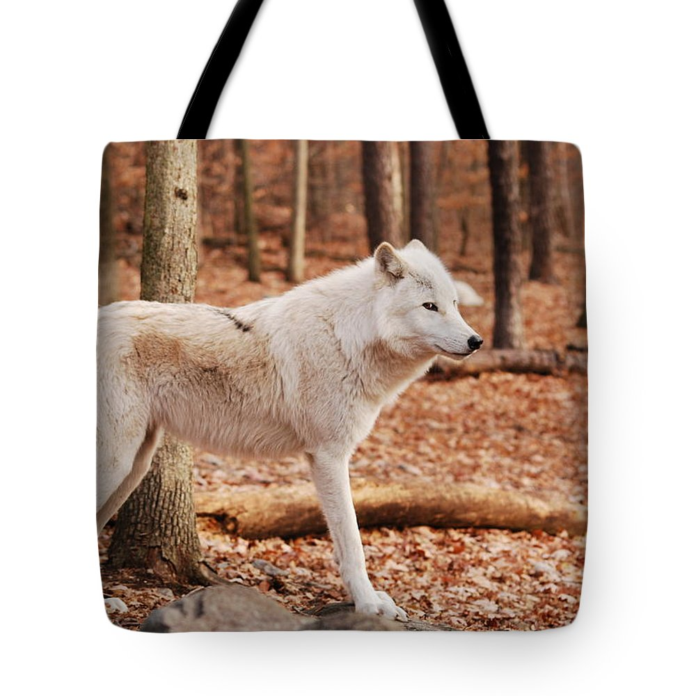 Wolf Tote Bag featuring the photograph Are You Talking To Me by Lori Tambakis