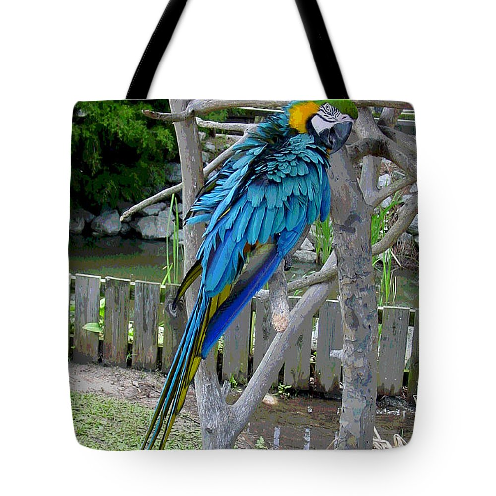 Blue Tote Bag featuring the photograph Arent I A Handsome Fellow - Blue And Gold Macaw by Suzanne Gaff
