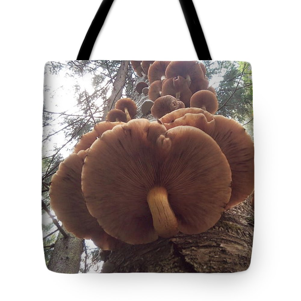 Mushrooms Tote Bag featuring the photograph Armillaria Autumn On A Tree Trunk by Yuri Hope