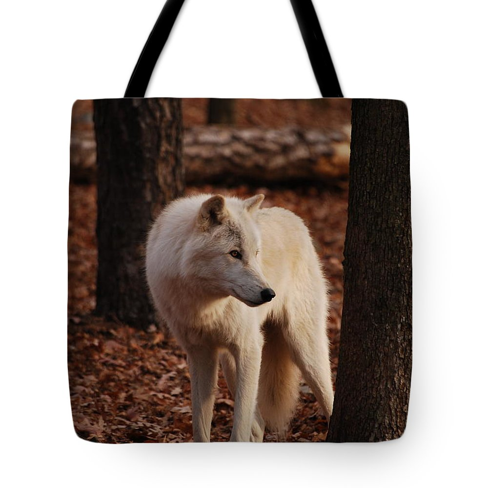 Wolf Tote Bag featuring the photograph Artic Wolf by Lori Tambakis