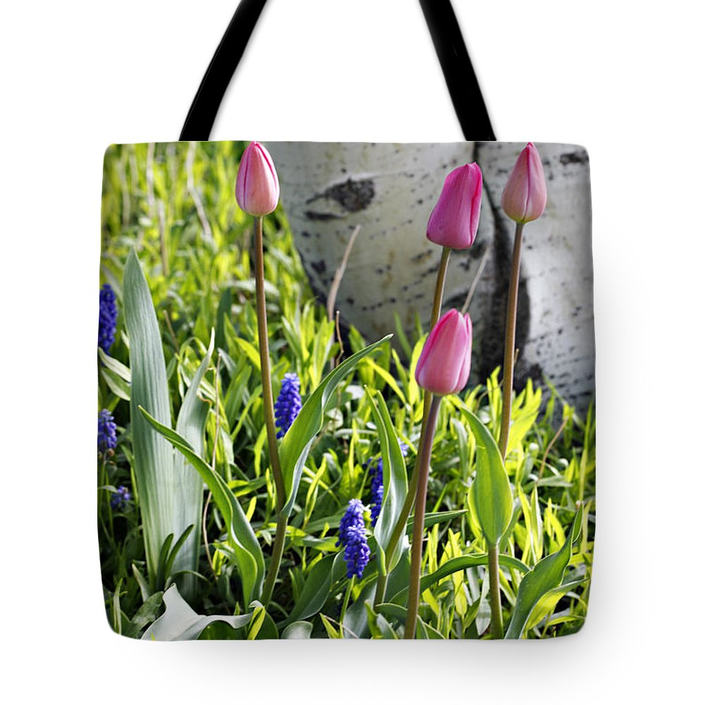 Aspen Tote Bag featuring the photograph Aspen And Tulips by Marilyn Hunt