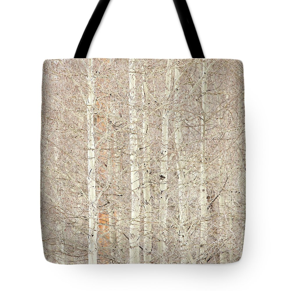 Landscape Tote Bag featuring the photograph Aspen Trees by Daniel Troy
