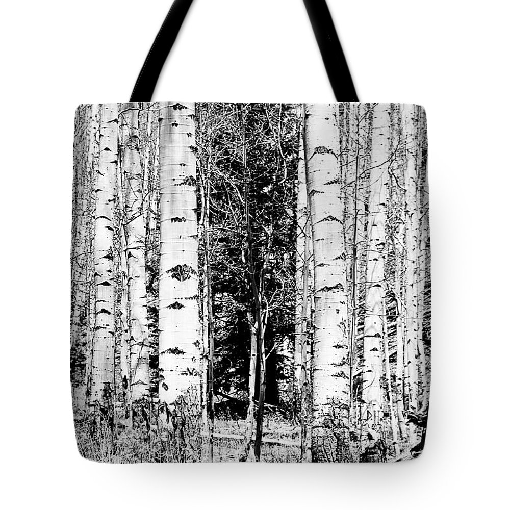 Black And White Tote Bag featuring the photograph Aspens And The Pine Black And White Fine Art Print by James BO Insogna