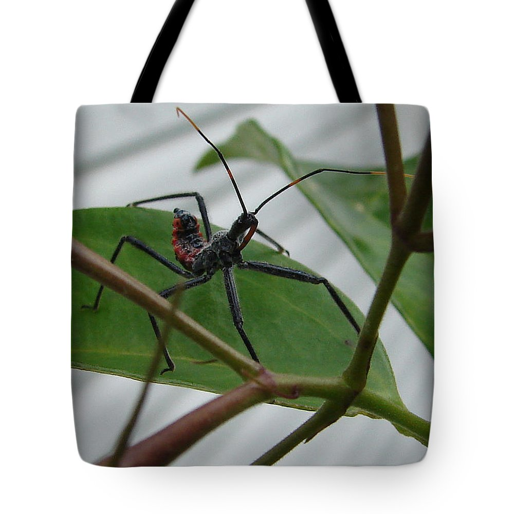 Insect Red Black Green Leaf Tote Bag featuring the photograph Assassin Bug by Luciana Seymour