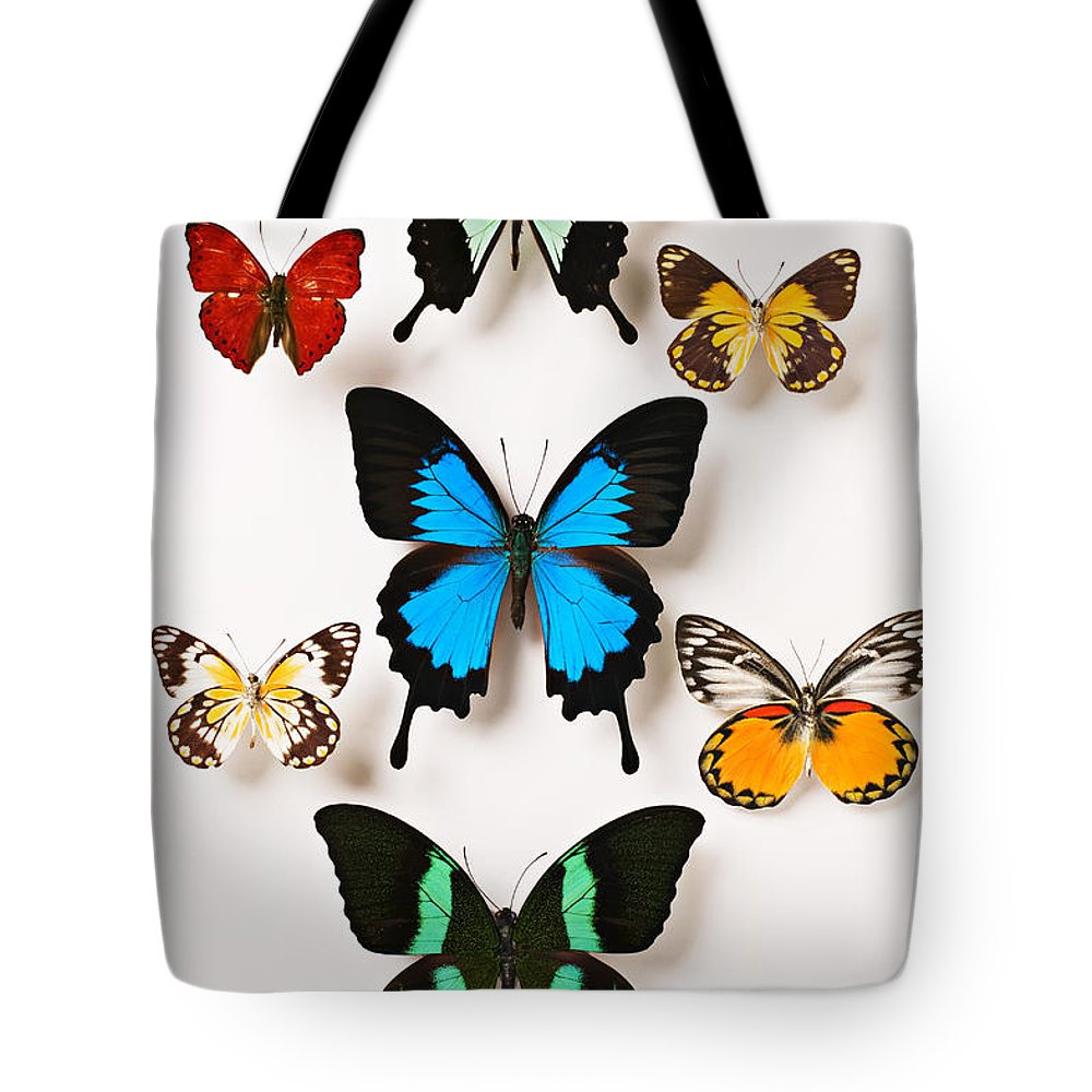 Butterfly Tote Bag featuring the photograph Assorted Butterflies by Garry Gay
