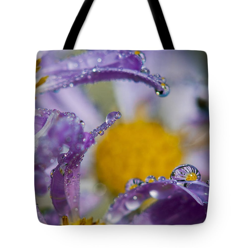 Dew Tote Bag featuring the photograph Aster And Dew by Robert Potts