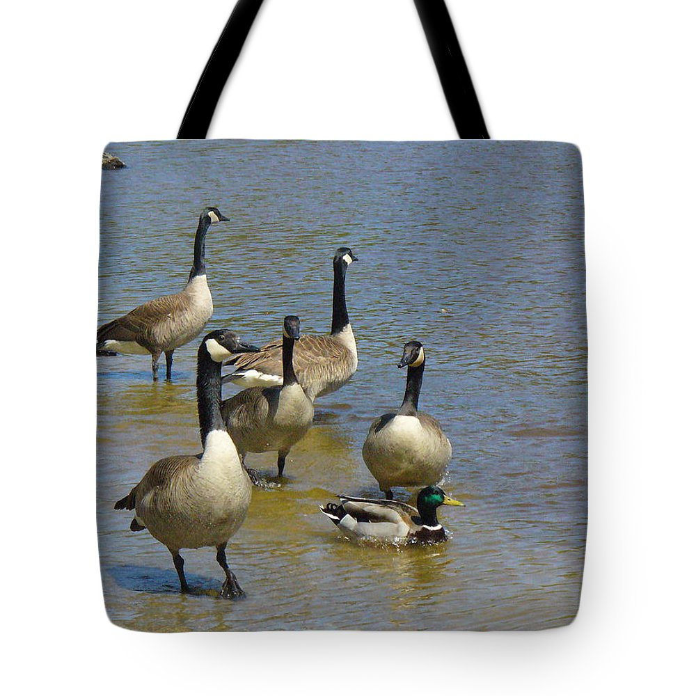 Geese Tote Bag featuring the photograph At Home In A Crowd by Peggy King
