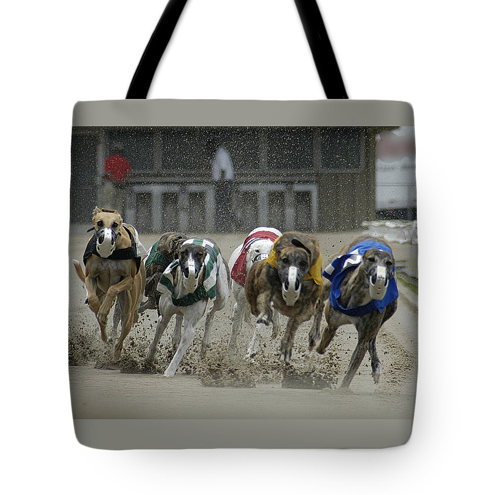 Greyhounds Tote Bag featuring the photograph At The Track by D'Arcy Evans