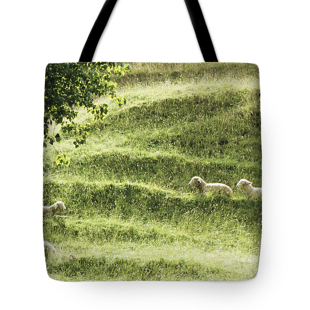 Animal Art Tote Bag featuring the photograph Auckland Sheep Grazing by Larry Dale Gordon - Printscapes
