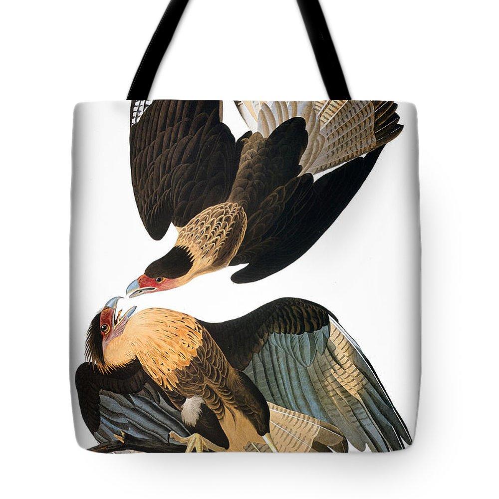1827 Tote Bag featuring the photograph Audubon: Caracara, 1827-38 by Granger