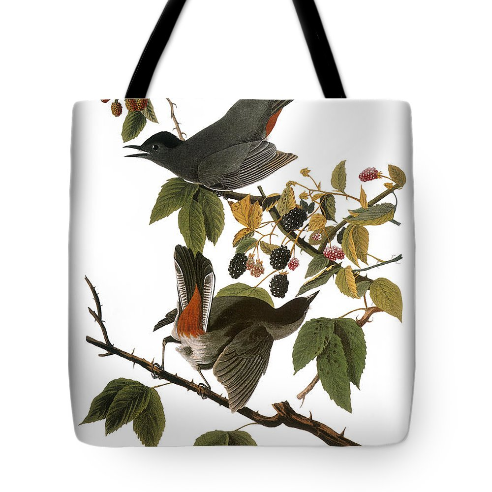 1827 Tote Bag featuring the photograph Audubon: Catbird, (1827-38) by Granger