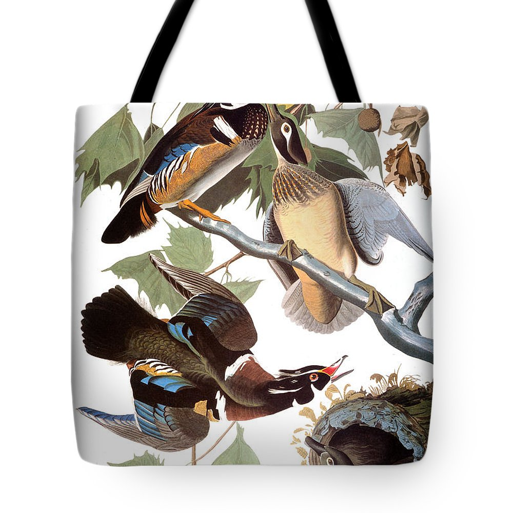 1838 Tote Bag featuring the photograph Audubon: Duck by Granger