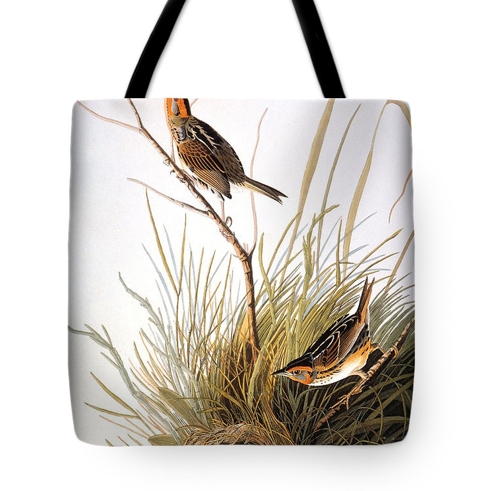 1838 Tote Bag featuring the photograph Audubon: Finch by Granger
