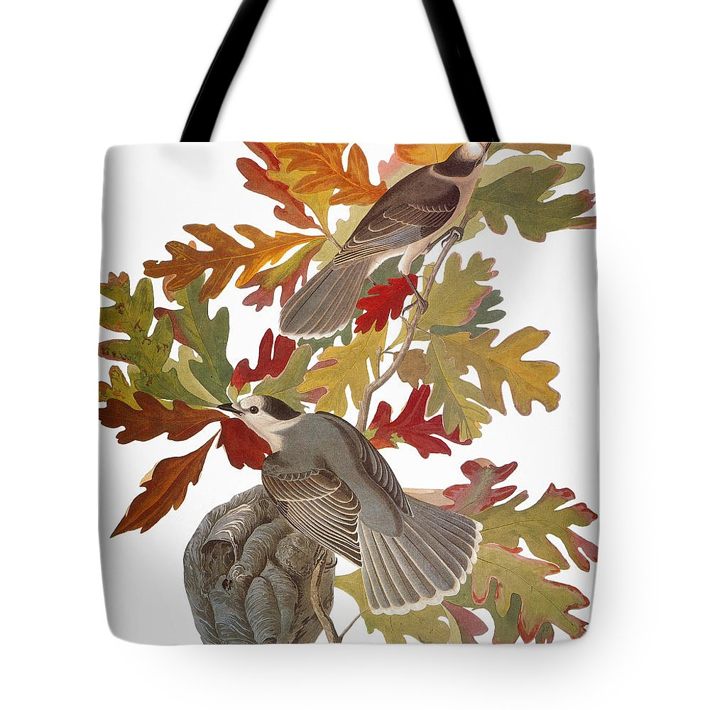 1838 Tote Bag featuring the photograph Audubon: Jay by Granger