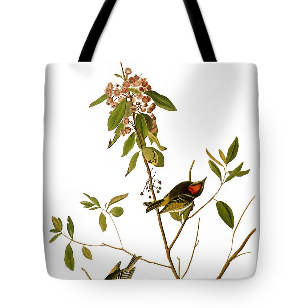 1827 Tote Bag featuring the photograph Audubon: Kinglet, 1827 by Granger