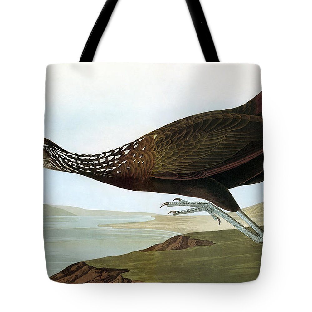 19th Century Tote Bag featuring the photograph Audubon: Limpkin by Granger