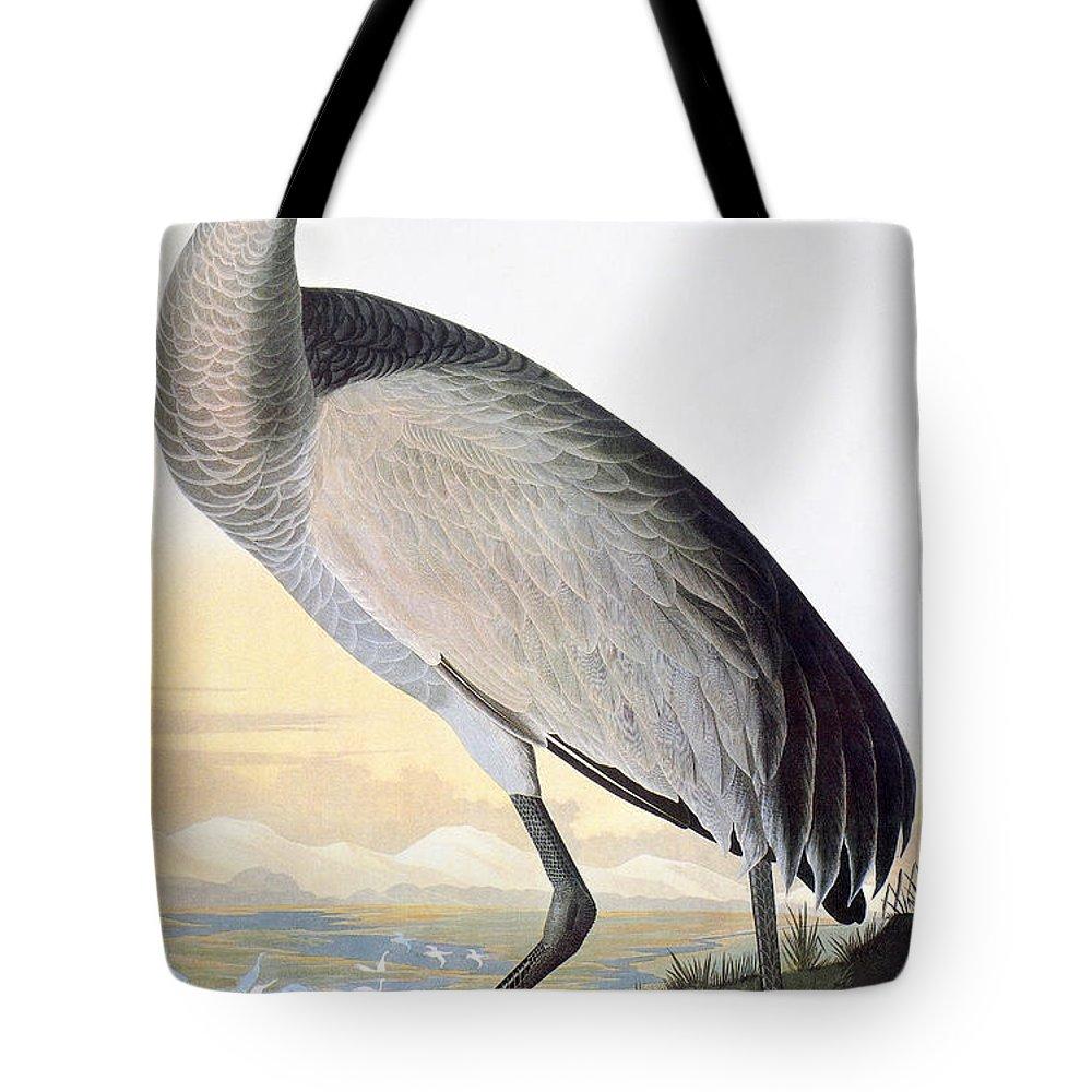 1827 Tote Bag featuring the photograph Audubon Sandhill Crane by John James Audubon