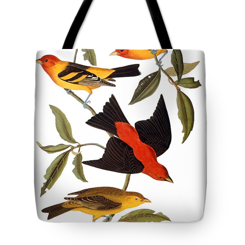 1827 Tote Bag featuring the photograph Audubon: Tanager, 1827 by Granger