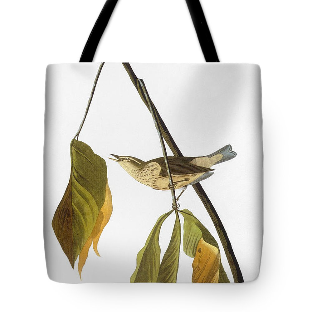 1827 Tote Bag featuring the photograph Audubon: Thrush, 1827 by Granger