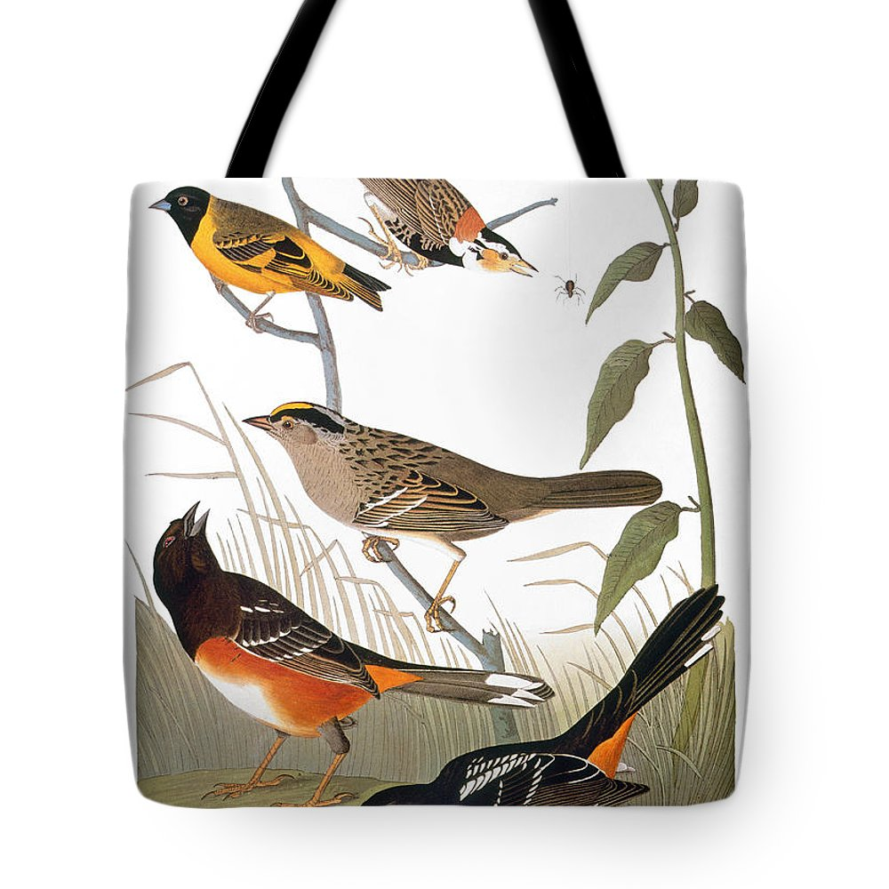 1838 Tote Bag featuring the photograph Audubon: Various Birds by Granger