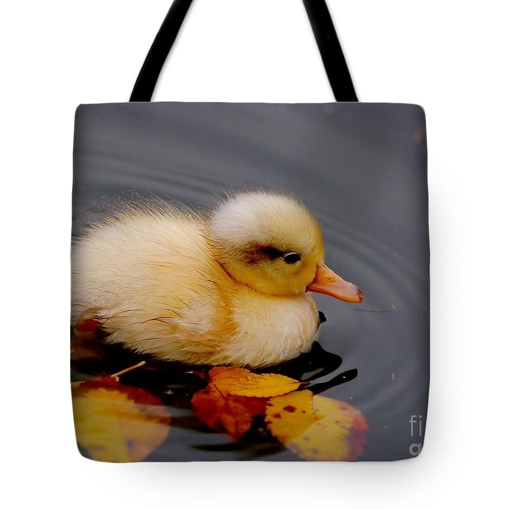 Bird Tote Bag featuring the photograph Autumn Baby by Jacky Gerritsen