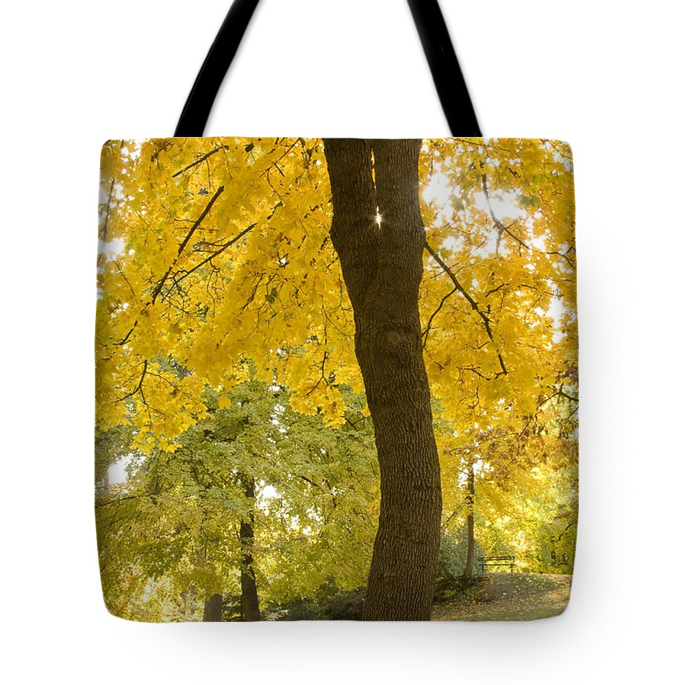 Tree Tote Bag featuring the photograph Autumn Dance by Idaho Scenic Images Linda Lantzy