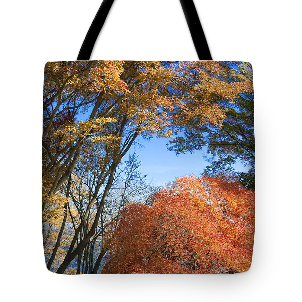 Autumn Tote Bag featuring the photograph Autumn Day by Steven Natanson