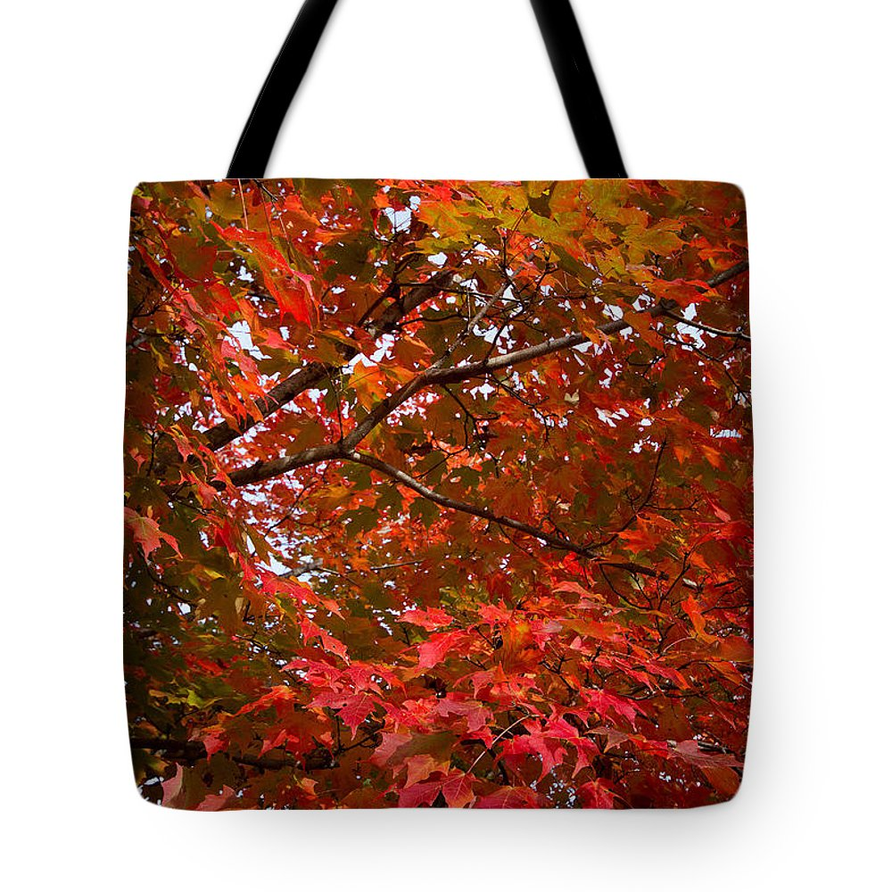 America Tote Bag featuring the photograph Autumn Foliage-1 by Riccardo Forte