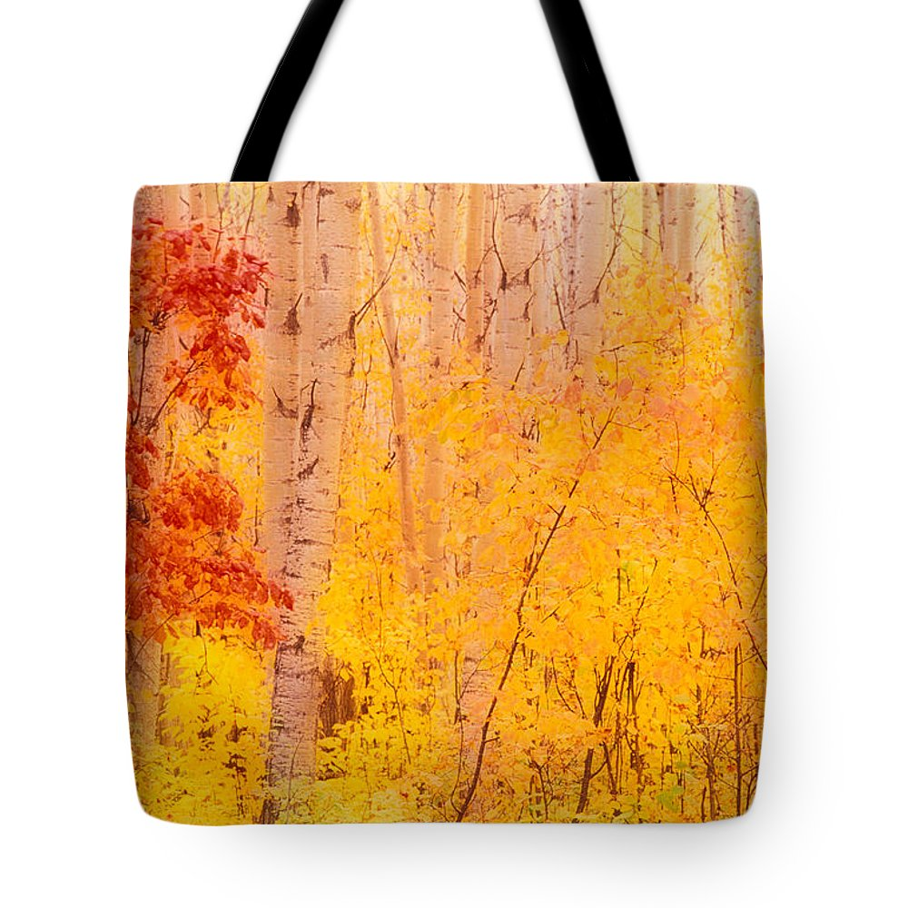 Photography Tote Bag featuring the photograph Autumn Forest Wbirch Trees Canada by Panoramic Images