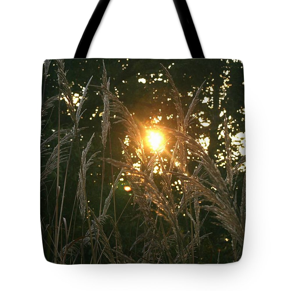 Light Tote Bag featuring the photograph Autumn Grasses In The Morning by Nadine Rippelmeyer