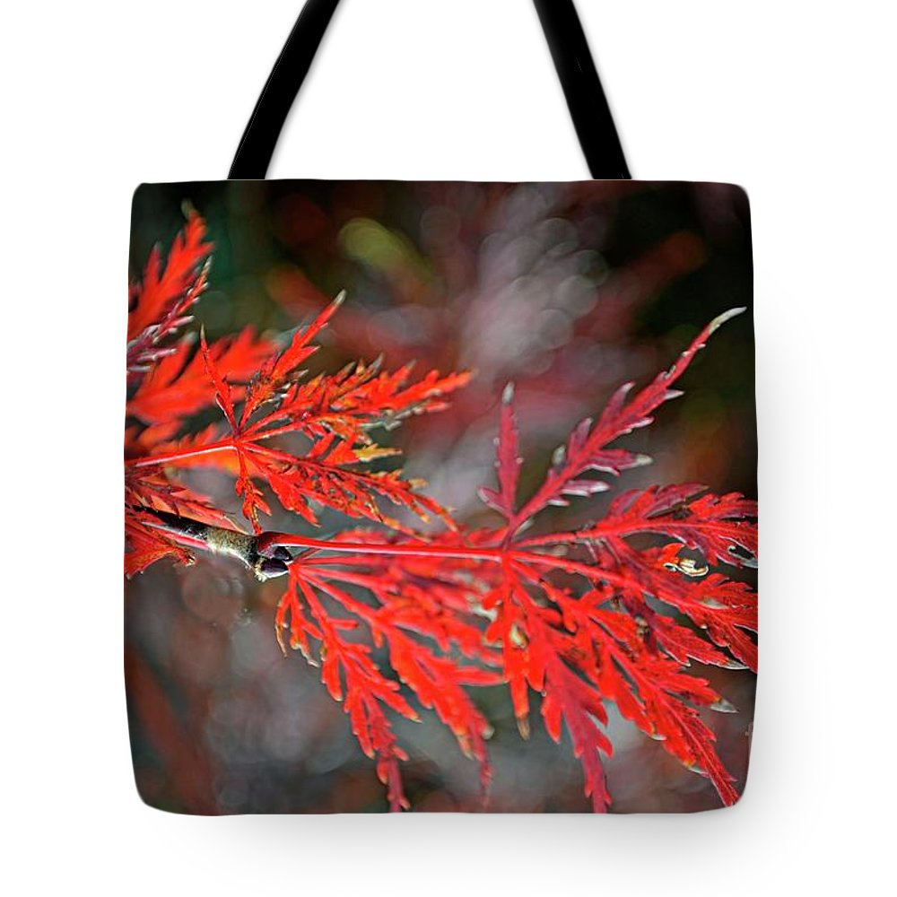 Tree Tote Bag featuring the photograph Autumn Japanese Maple by Debbie Portwood