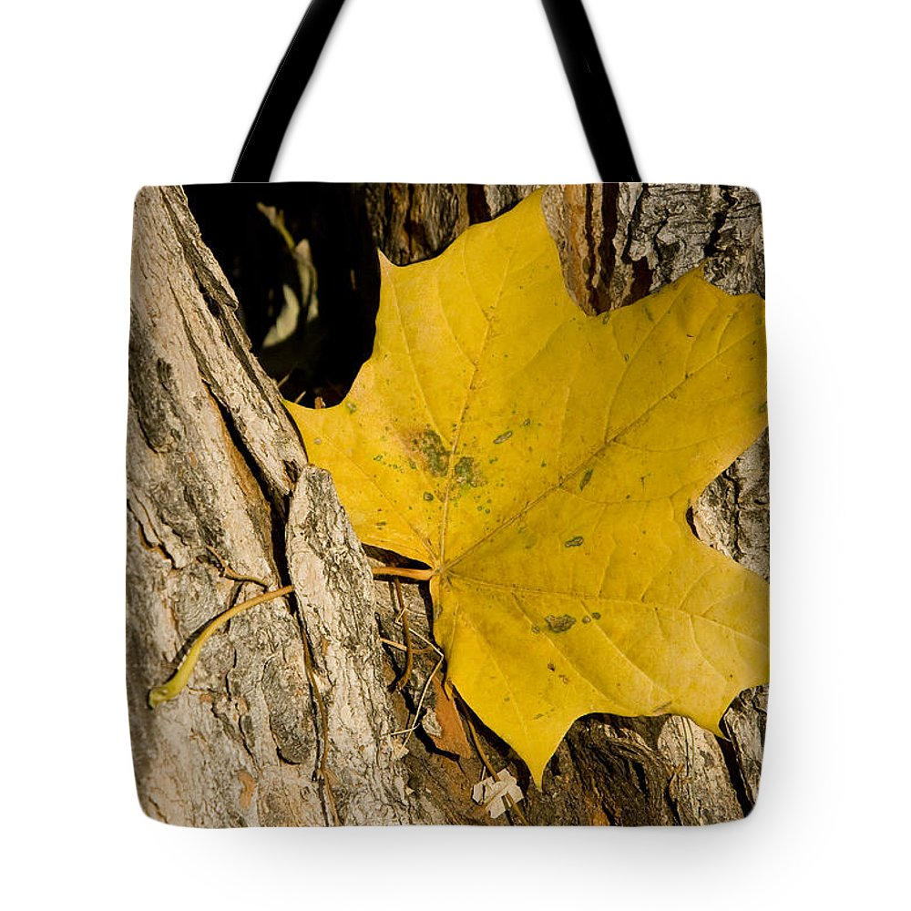 Maple Tote Bag featuring the photograph Autumn Leaf by James BO Insogna
