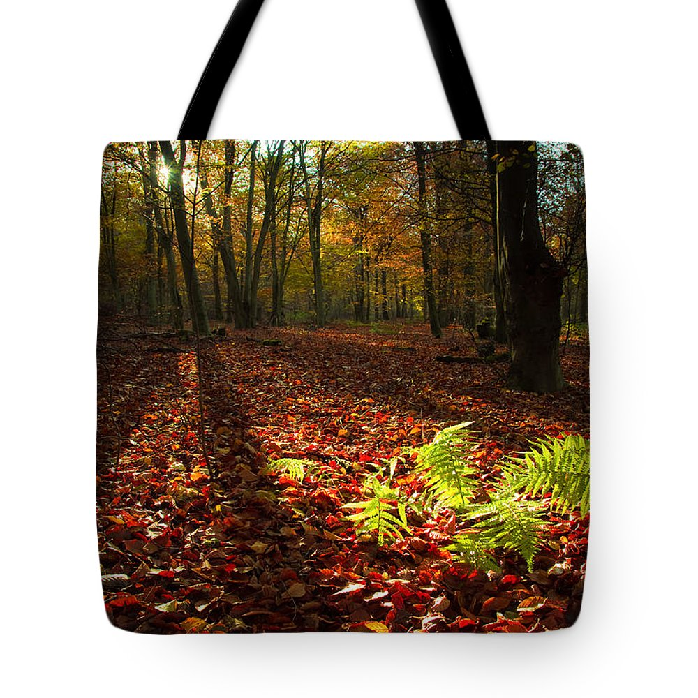 Fern Tote Bag featuring the photograph Autumn Light by Will Gudgeon