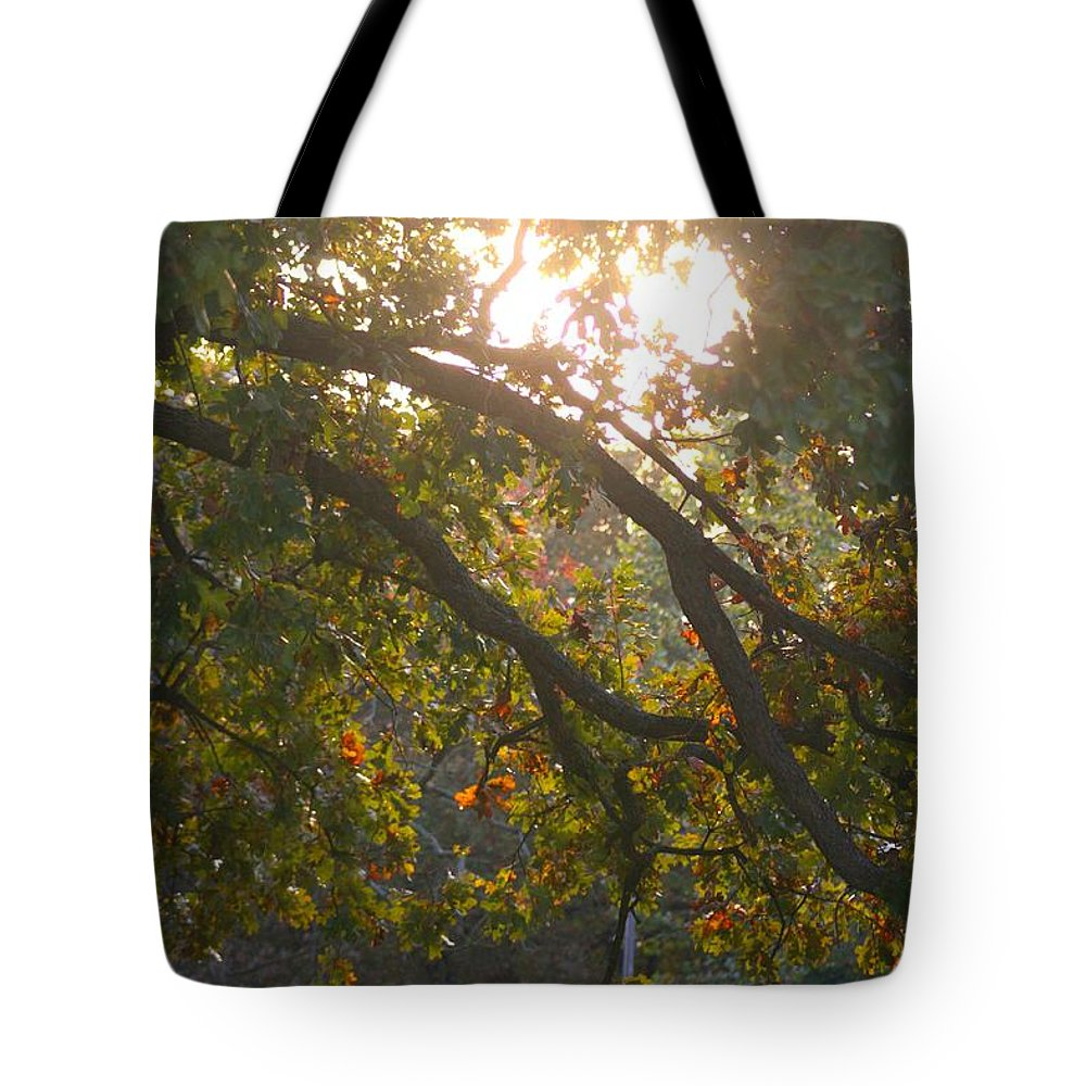 Autumn Tote Bag featuring the photograph Autumn Morning Glow by Nadine Rippelmeyer