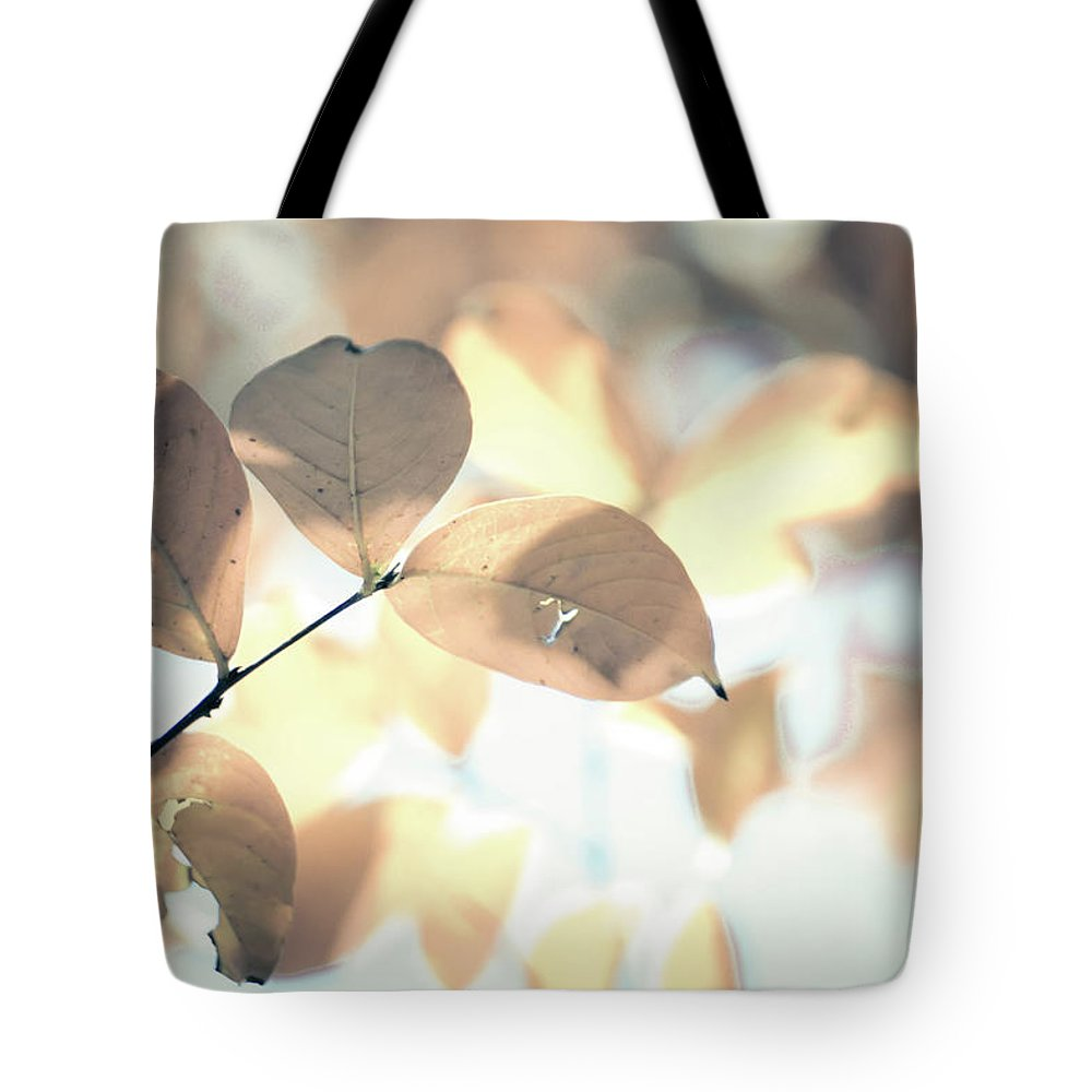 Group Tote Bag featuring the photograph Autumn Season Leaves On A Tree In Sun Light by Alex Grichenko