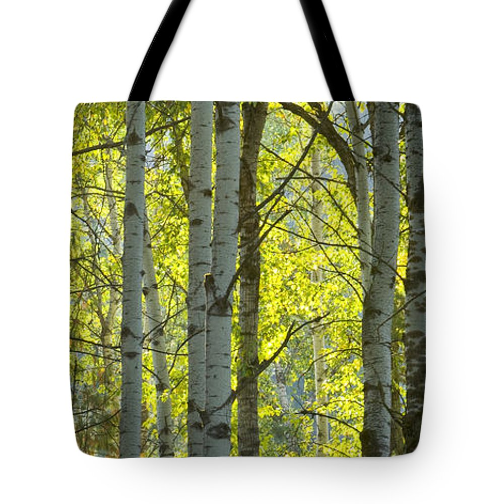 Trees Tote Bag featuring the photograph Autumn Through The Trees by Idaho Scenic Images Linda Lantzy