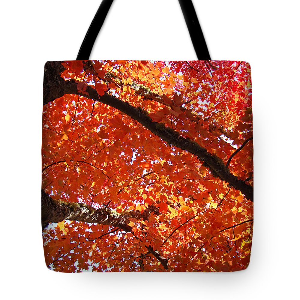 Nature Tote Bag featuring the photograph Autumn Tree Art Prints Orange Red Leaves Baslee Troutman by Baslee Troutman