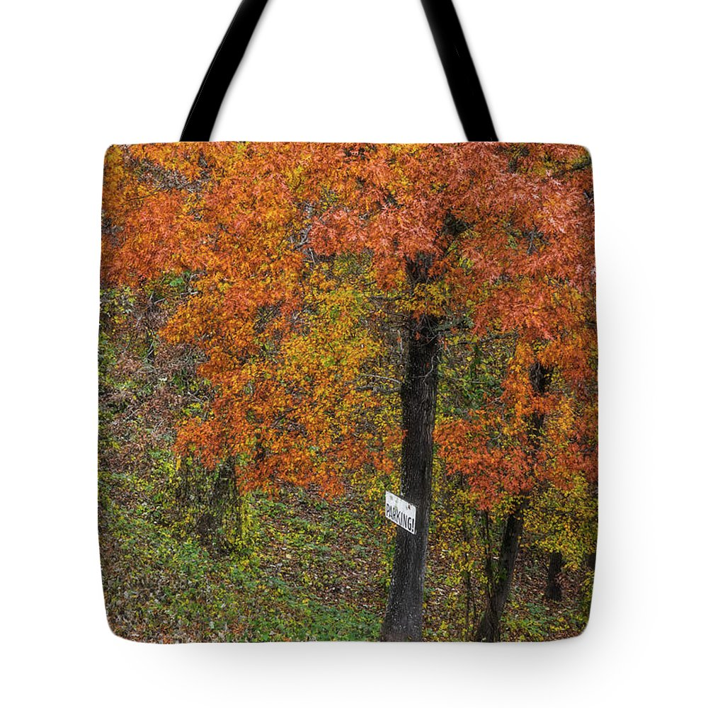 Tree Tote Bag featuring the photograph Autumn Tree by Patricia Cale