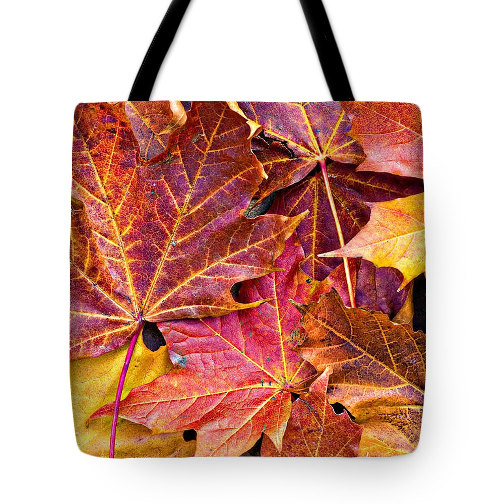 Autumn Tote Bag featuring the photograph Autumnal Carpet by Meirion Matthias