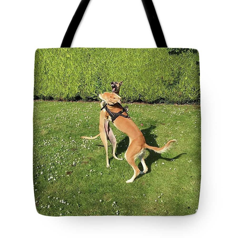 Persiangreyhound Tote Bag featuring the photograph Ava The Saluki And Finly The Lurcher by John Edwards