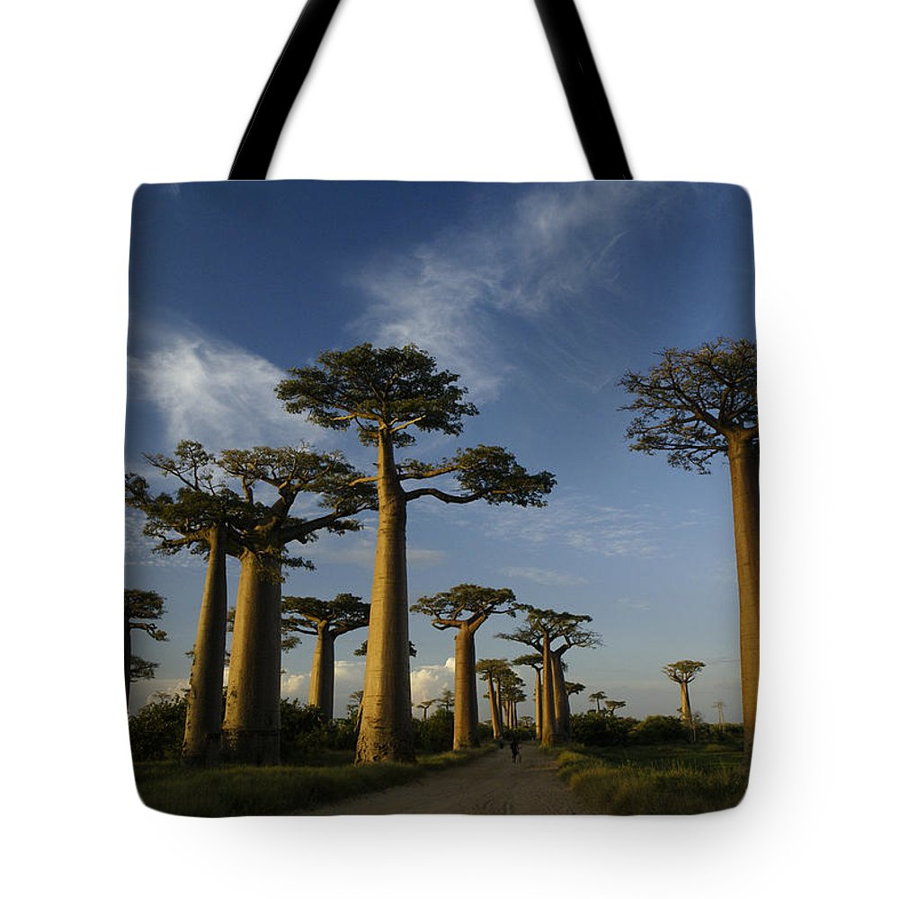 Madagascar Tote Bag featuring the photograph Avenue Des Baobabs by Michele Burgess