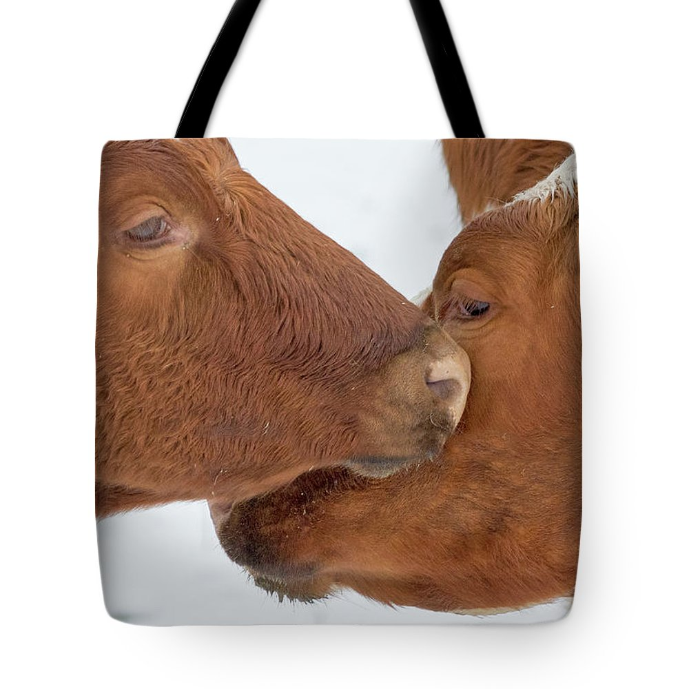 Cow Tote Bag featuring the photograph Ayrshire Affection by Bill Wakeley