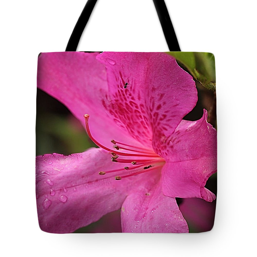 Azalea Tote Bag featuring the photograph Azalea by Edelberto Cabrera