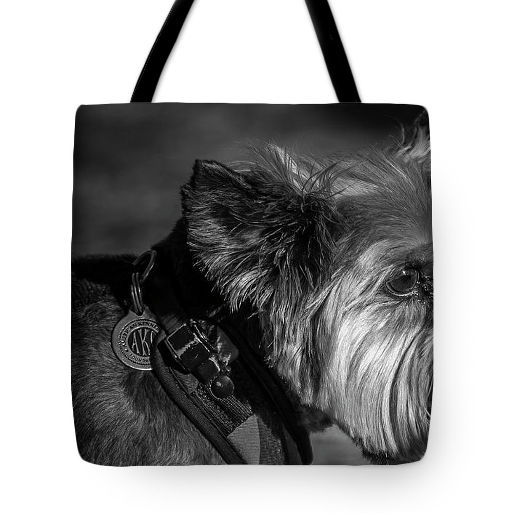 Dog Tote Bag featuring the photograph B And W Dog by Patrick Burke