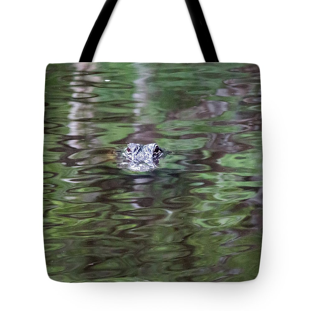 Florida Tote Bag featuring the photograph Babcock Wilderness Ranch - Alligator Lake - Heads Up by Ronald Reid