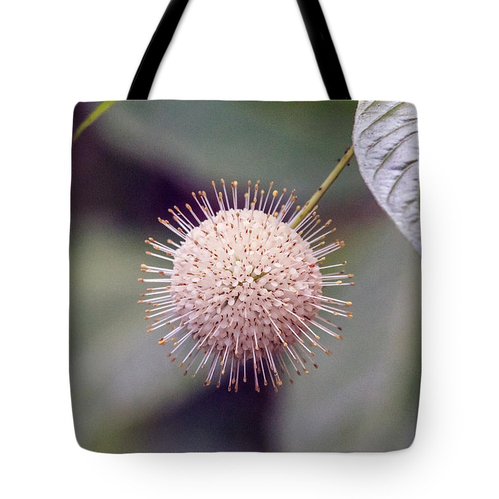 Florida Tote Bag featuring the photograph Babcock Wilderness Ranch - Buttonbush by Ronald Reid