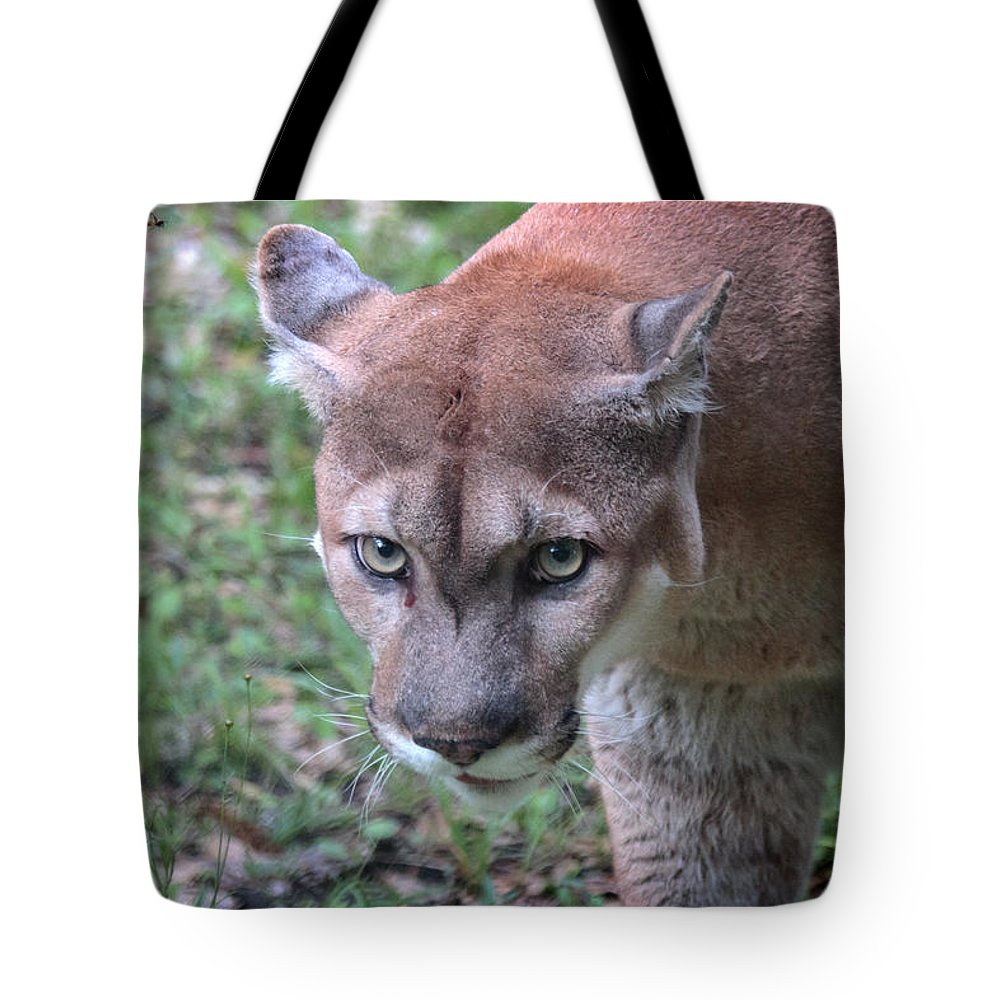 Florida Tote Bag featuring the photograph Babcock Wilderness Ranch - Oceola The Panther On The Prowl by Ronald Reid